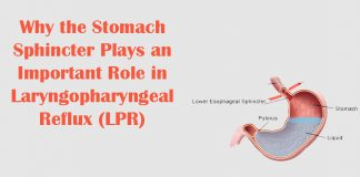 Why the Stomach Sphincter Plays an Important Role in Laryngopharyngeal Reflux (LPR)